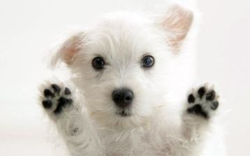Uber-Puppies