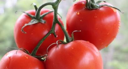 tomatos-3