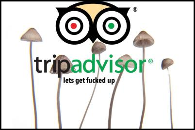 New Focus of Trip Advisor